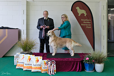 Southern Golden Retriever Club Breed Shows