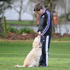 Southern Golden Retriever Club Obedience
