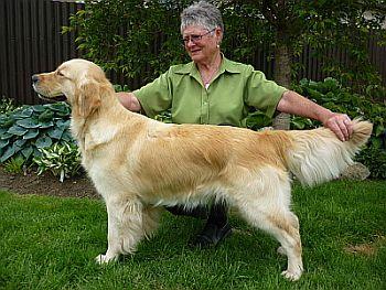 Southern Golden Retriever Club News 2011